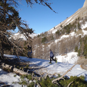 Snowshoeing in a  forest in the Alps