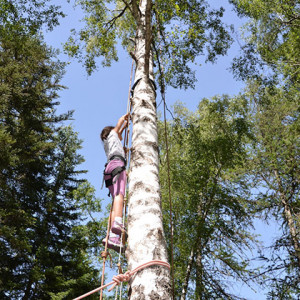 Tree Climbing - child high up tree trunk