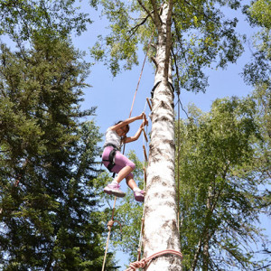 Tree Climbing child high up in tree