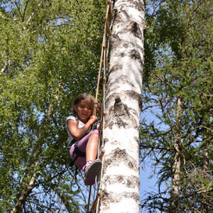 Tree Climbing on ladder