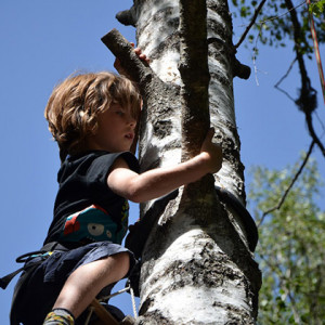 tree climbing on an activity holiday in the French Alps