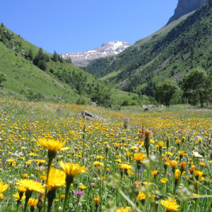 walking in the French Alps flower meadow and mountains