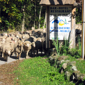 Hotel val des Sources in the french Alps sheep