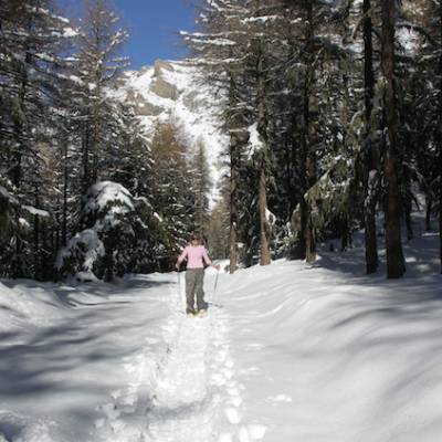 Snowshoeing in the woods in the Alps