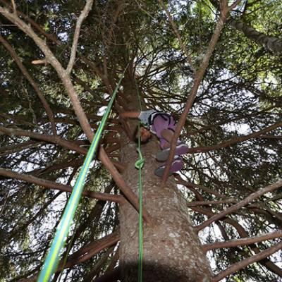 Tree Climbing - child high up tree