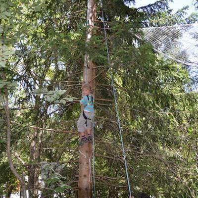 Tree Climbing half way up tree