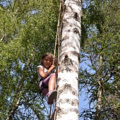 Tree Climbing on ladder