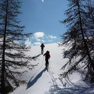 Ski touring skinning up through trees