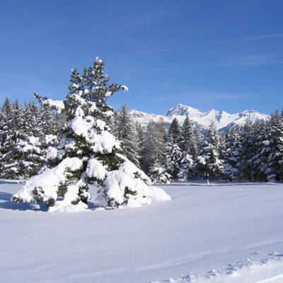 Cross Country skiing snow laden tree