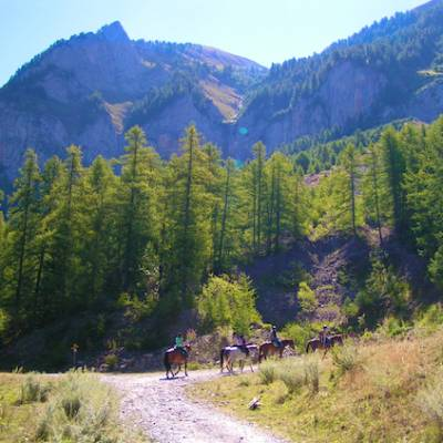 Horse riding in the Alps woods and mountains turin