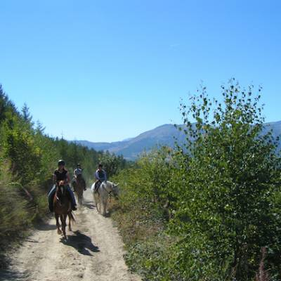Horse riding in the Alps forest track