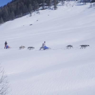 Husky Dog Sledding in the Alps in orcieres