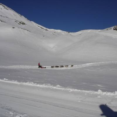 Husky Dog Sledding ion a snowy plateau