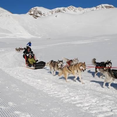 Husky Dogs pulling a sled
