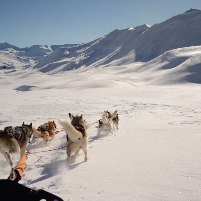 husky sledding in Orcières Champsaur Valley.jpg