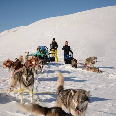 husky sledding in Orcières Southern French Alps.jpg