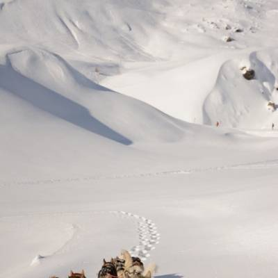 husky sledding in Orcières ski resort.jpg