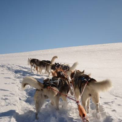 husky sledding in Orcières winter activity.jpg