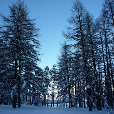 Snowshoeing trees backlit in the Alps