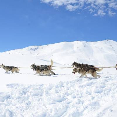 husky sledding with undiscovered mountains (1 of 1).jpg