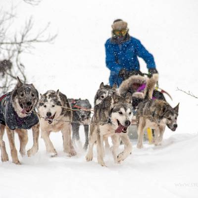 Husky Sledding in Norway on cross country winter activity holiday (1 of 1)-2.jpg