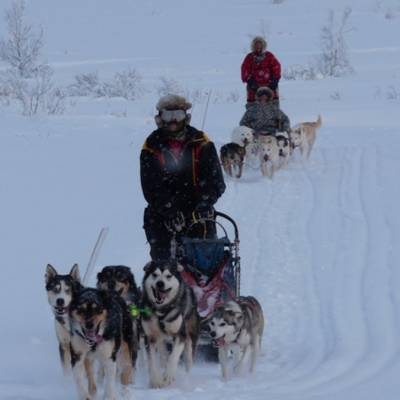 Husky Sledding in Norway on cross country winter activity holiday (1 of 1).jpg