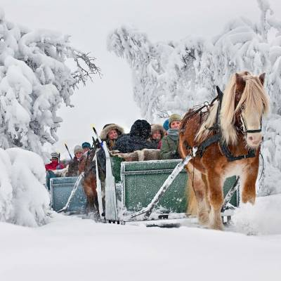 Horse sleigh rifde on cross country skiing holiday in Norway (1 of 1)-2.jpg