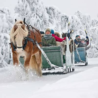 Horse sleigh rifde on cross country skiing holiday in Norway (1 of 1).jpg