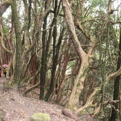 through-forest.jpg