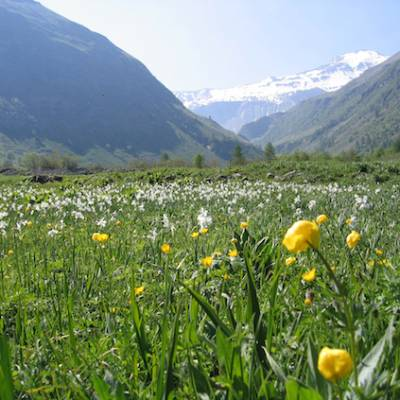 Walking in the French Alps alpine meadow